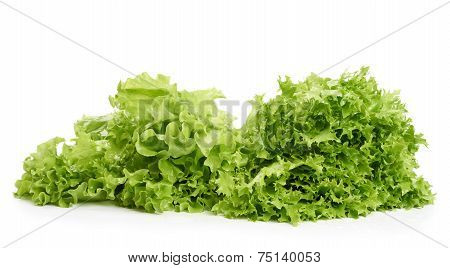 Two Sorts Of Lettuce