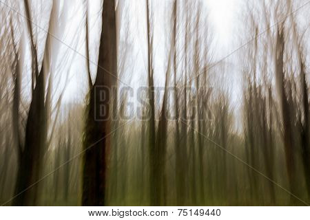 Abstract Motion Blur Of Trees