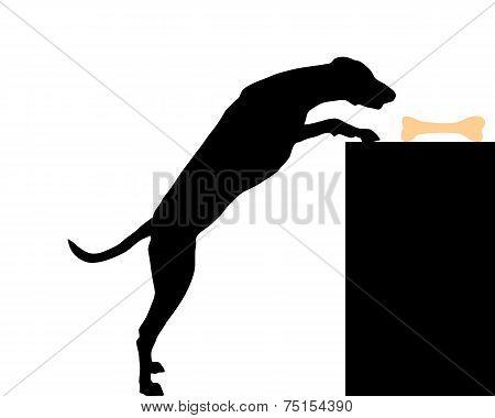Dog Steals Bone