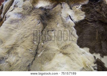 Skins of a deer