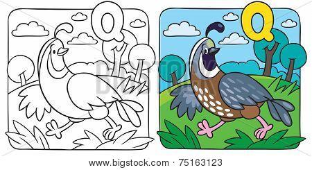 Little quail coloring book. Alphabet Q