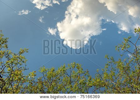 Green leaves of a tree in vibrant sunlight poster