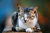 A content looking cat resting on a wall. poster