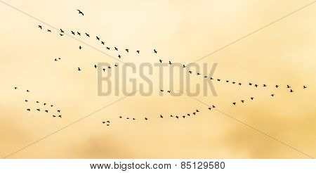 Flock of birds flying in V-formation