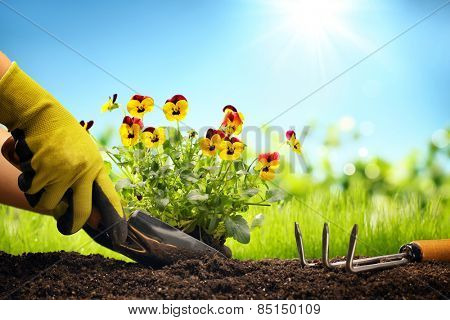 Planting Flowers in a garden,Closeup.