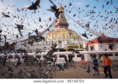Pigeons Around Boudhanath Stupa