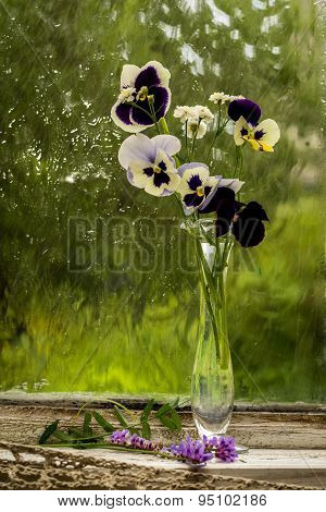 Heartsease (viola Tricolor) Fine Flowers Bouquet In A Window Sill In A Sunny Rainy Day
