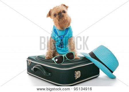 Dog And A Suitcase For Travel