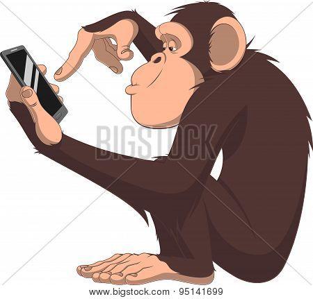 Monkey and smartphone