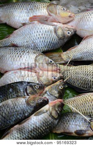 Asia Myanmar Nyaungshwe Fish Market