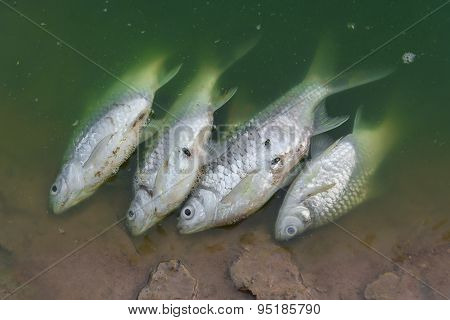 Dead fish floated in waste water.