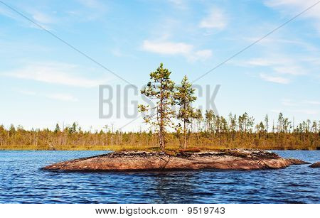 Two Small Pines On Lake