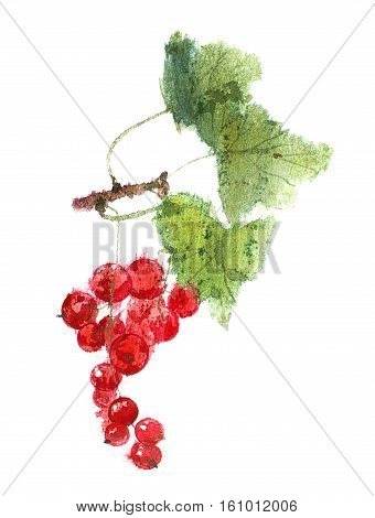 watercolor image of Redcurrant berries isolated on a white background