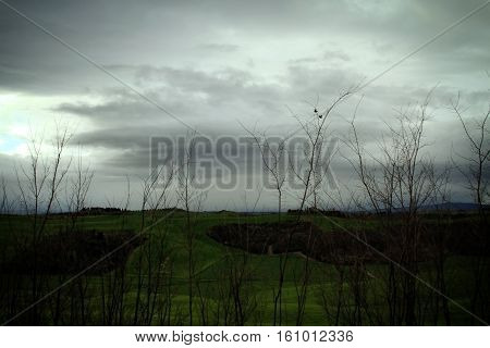 Two birds flying around bare trees in a gloomy scene.