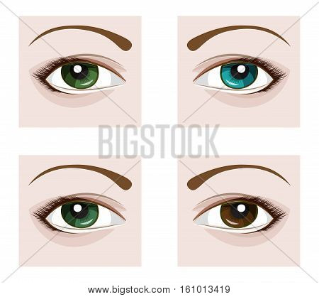 a vector eye with eyelashes four flowers blue green brown and gray