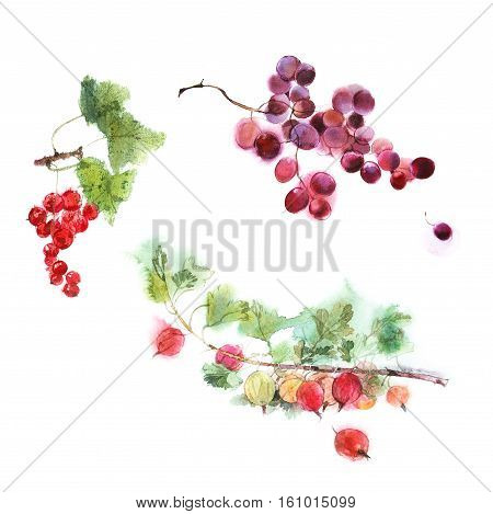 watercolor image set of berries isolated on a white background