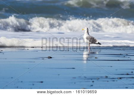seagull standing on the sand just as the waves crash and tumble