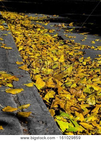 Leaf litter in Autumn in a park of Szeged, Hungary