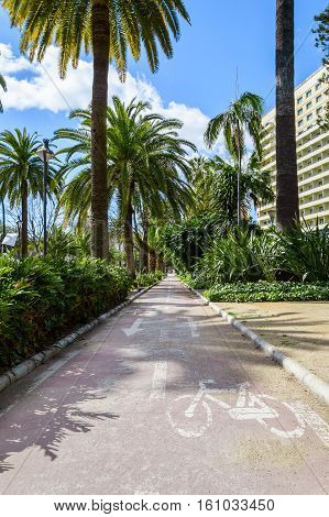 Bike lane to cycle between palm trees under the blue sky in Malaga Spain