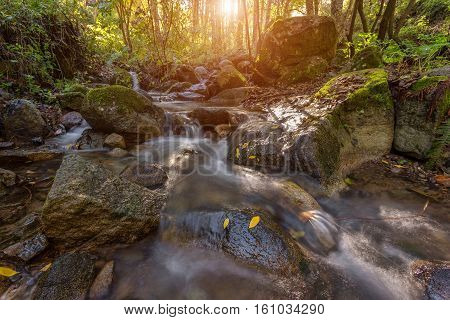 Wonderful forest autumn landscape. Monchique Portugal Algarve