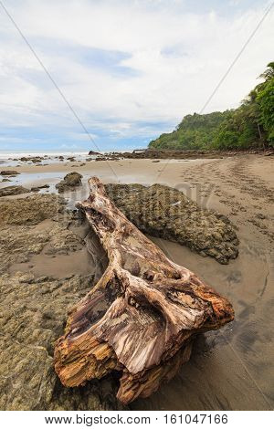 Driftwood on rocky beach montezuma Costa Rica