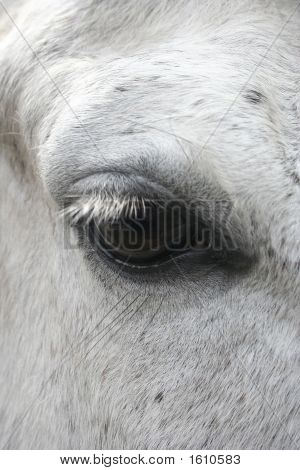 Very Close Up Of A Horse's Eye poster