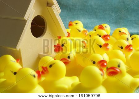 This is where all the rubber ducks come to life before they move to your bathtub.