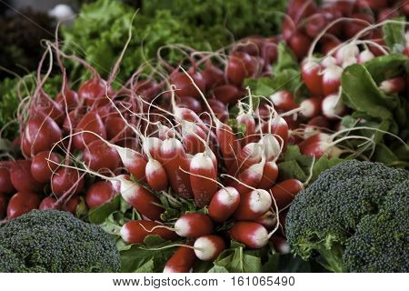 Bunches of red and red/white tipped radishes at the outdoor/indoor Jean-Talon Market in Montreal, Quebec, on a bright day in September.