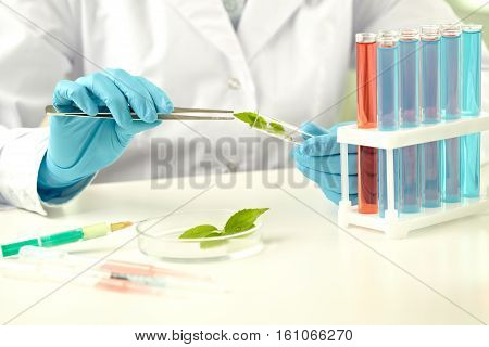 Scientist making experiment with plant in lab