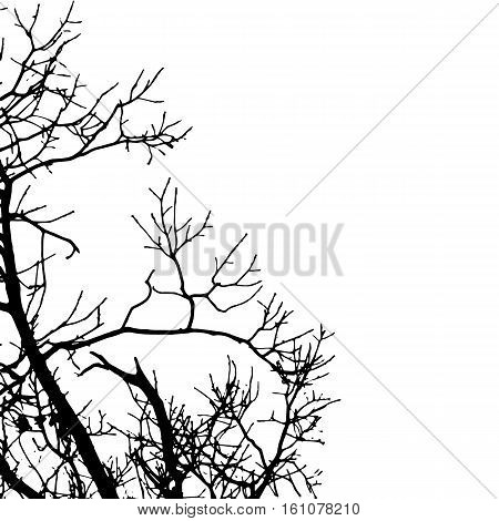 Vector black silhouette of a bare tree. Black silhouette image on white background. Vector illustration.