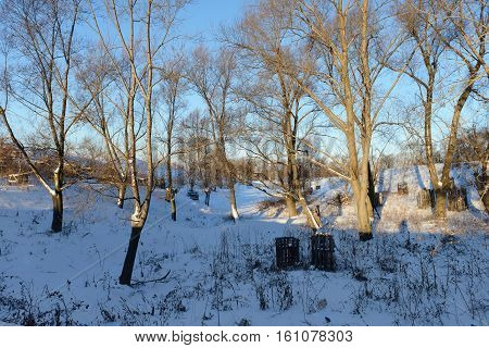 sunny winter landscape with trees and snowdrifts in the ravine