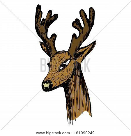hand-drawn sketch of a deer's head in half-turn on a white background. Stock products for hunting site billboards wildlife clipart.