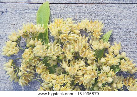 natural background with fresh linden flowers on wooden boards