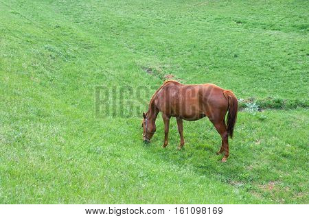 Lonely horse on a spring pasture .
