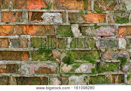 Ancient brick wall covered with moss .