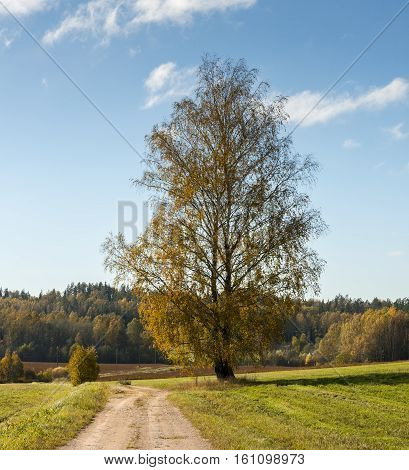 Lonely birch tree and countryside road in autumn, Europe