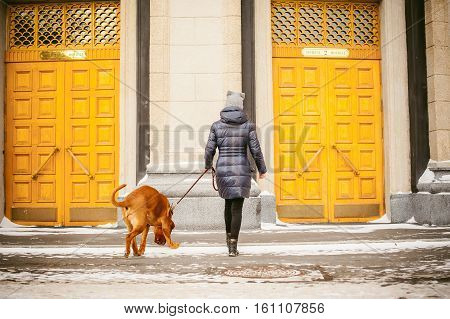 Winter Walk In The Snow With A Dog Breed Dogue De Bordeaux. Girl Walking A Big Red Dog On A Leash