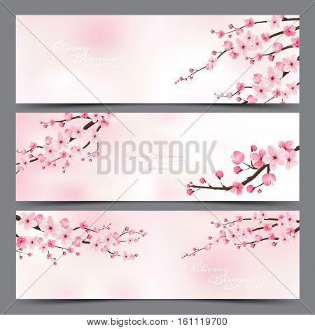 cherry blossom realistic vector sakura japan blur background