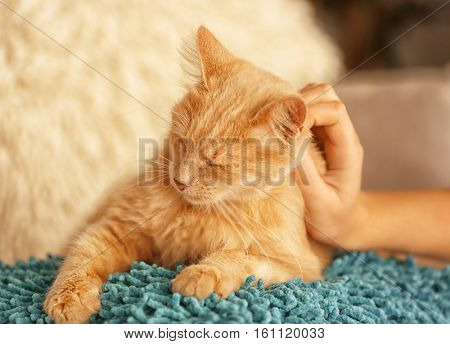 Female hand stroking cute cat at home
