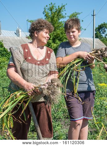Grandmother with grandson harvested garlic harvest in the garden