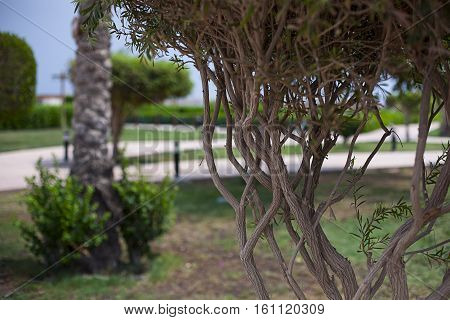 Green bush park in sharm el sheikh Egypt