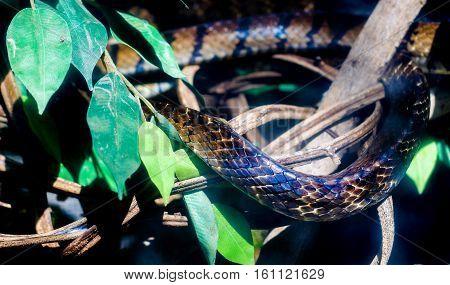 Skin Of Danger Snake Animal