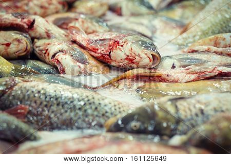 Fresh carp fish ready for industrial processing