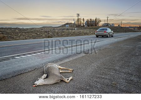 Dead Deer Hit By A Car Lying By The Road At Sunset, Usa.