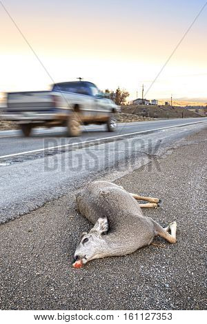 Dead Deer Hit By A Car Lying By The Road At Sunset.