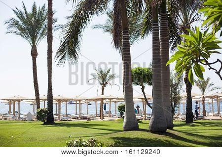 Green bush park road in Sharm el Sheikh, Egypt