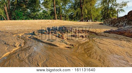 Nang Thong Beach at low tide in Khao Lak Thailand. Wet sand and the rock on the seashore when low tide in the evening.