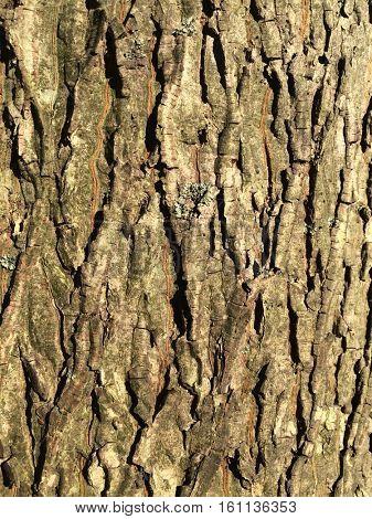 Groves bark