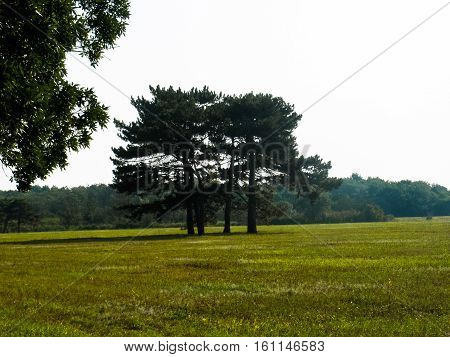 beautiful trees surrounded by a green lawn in summer