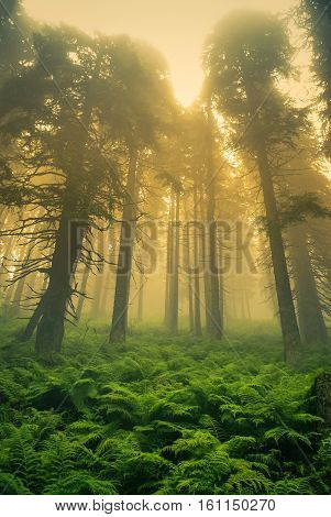 Mysterious Forest In Slovakia